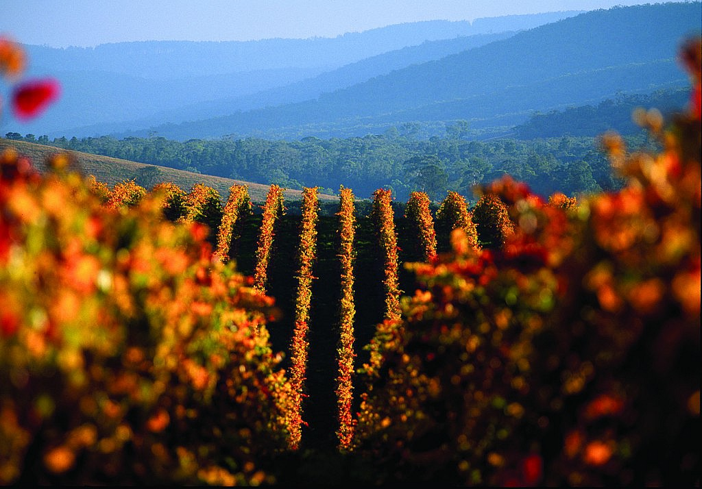 Group Wine Tours Yarra Valley
